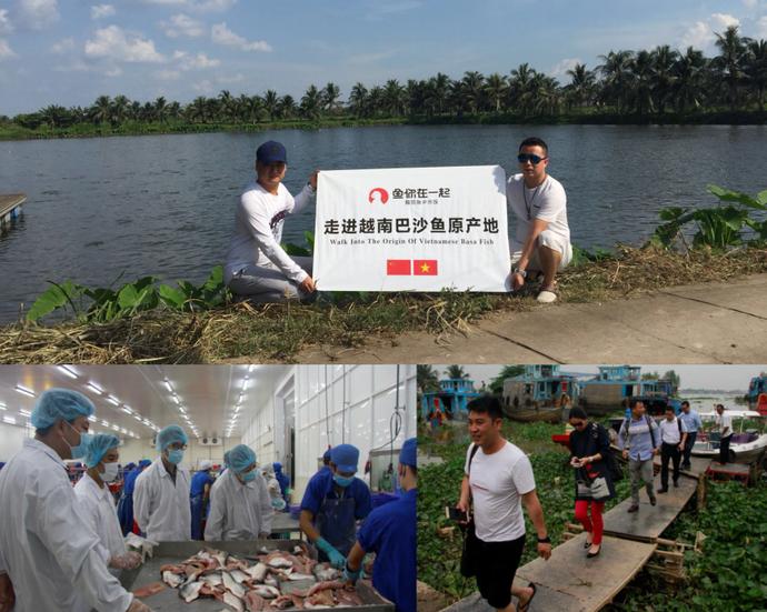 越南巴沙鱼养殖基地